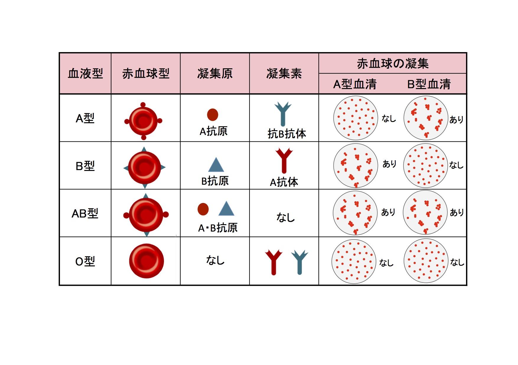 型 組み合わせ 血液